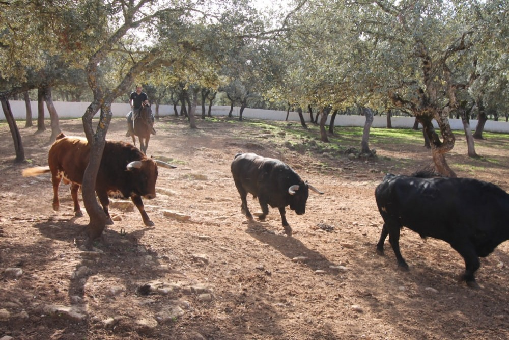 Restaurant in Estepona - Ronda bulls and horses (6 pax)