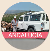 Day trip - Andalucia Tour