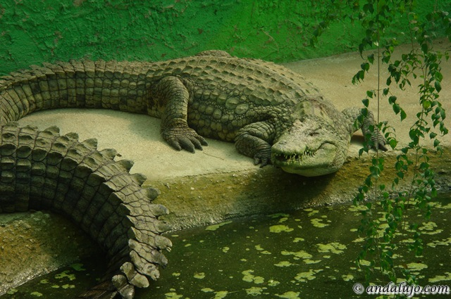 Theme Parks - Crocodile Park